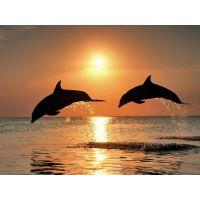 """Набор алмазной мозаики """"Дельфины на закате"""" (DM-022)"""