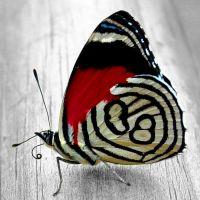 """Набор алмазной мозаики """"Яркая бабочка"""" (DM-179)"""